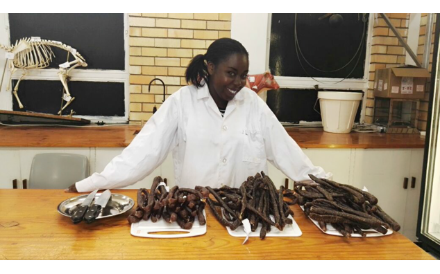 Droëwors produced in the Meat Science lab at University of Fort Hare